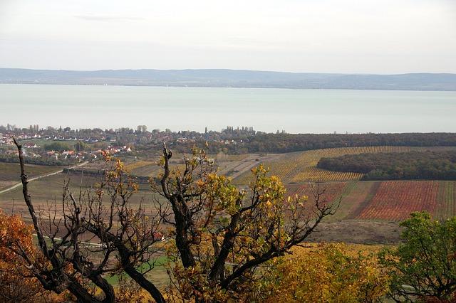 vins du lac Balaton