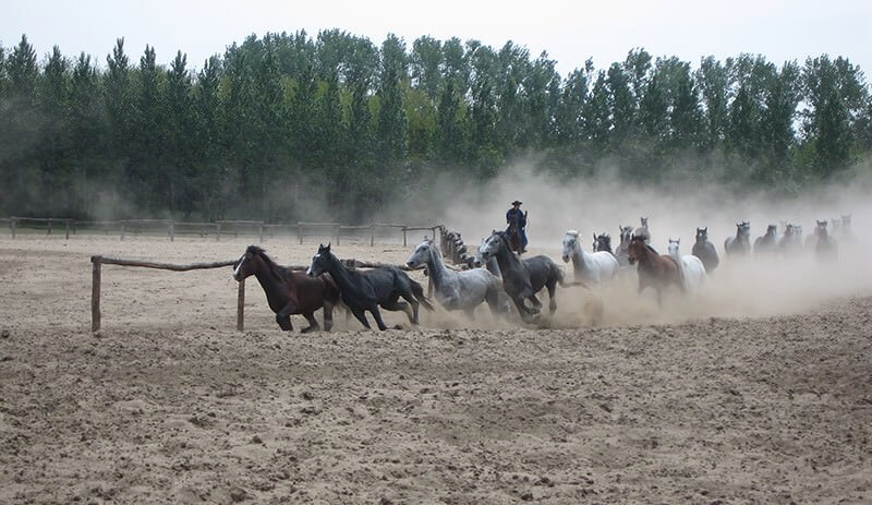Parc Hortobagyi La grande plaine hongroise