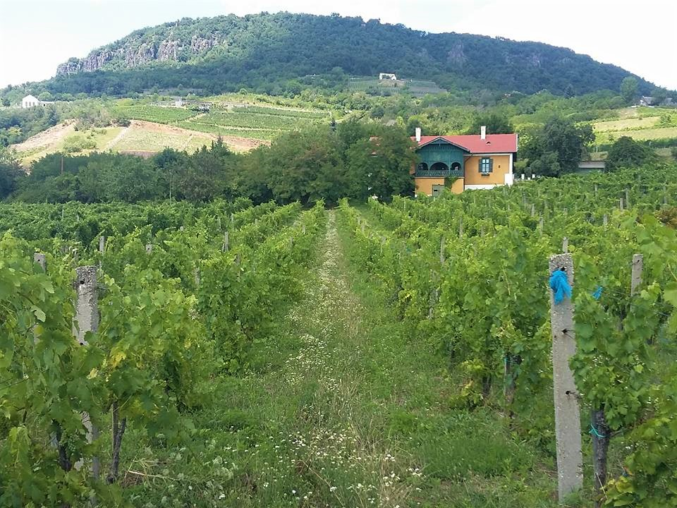 vignes de balaton vins de badacsony