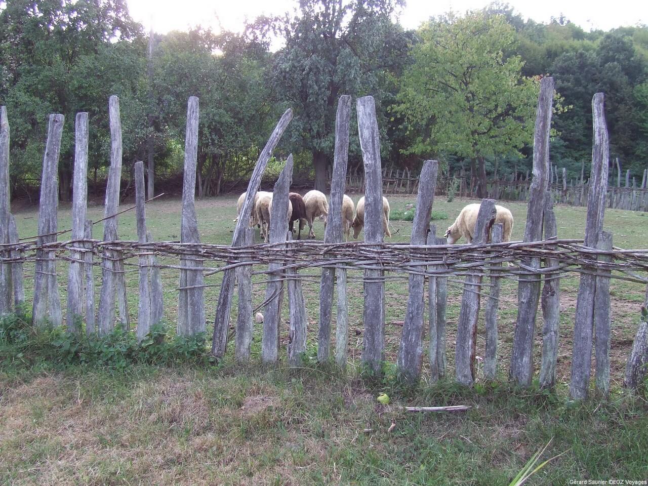 Rencontre inoubliable à Arilje en Serbie centrale : merveilleux souvenir 19