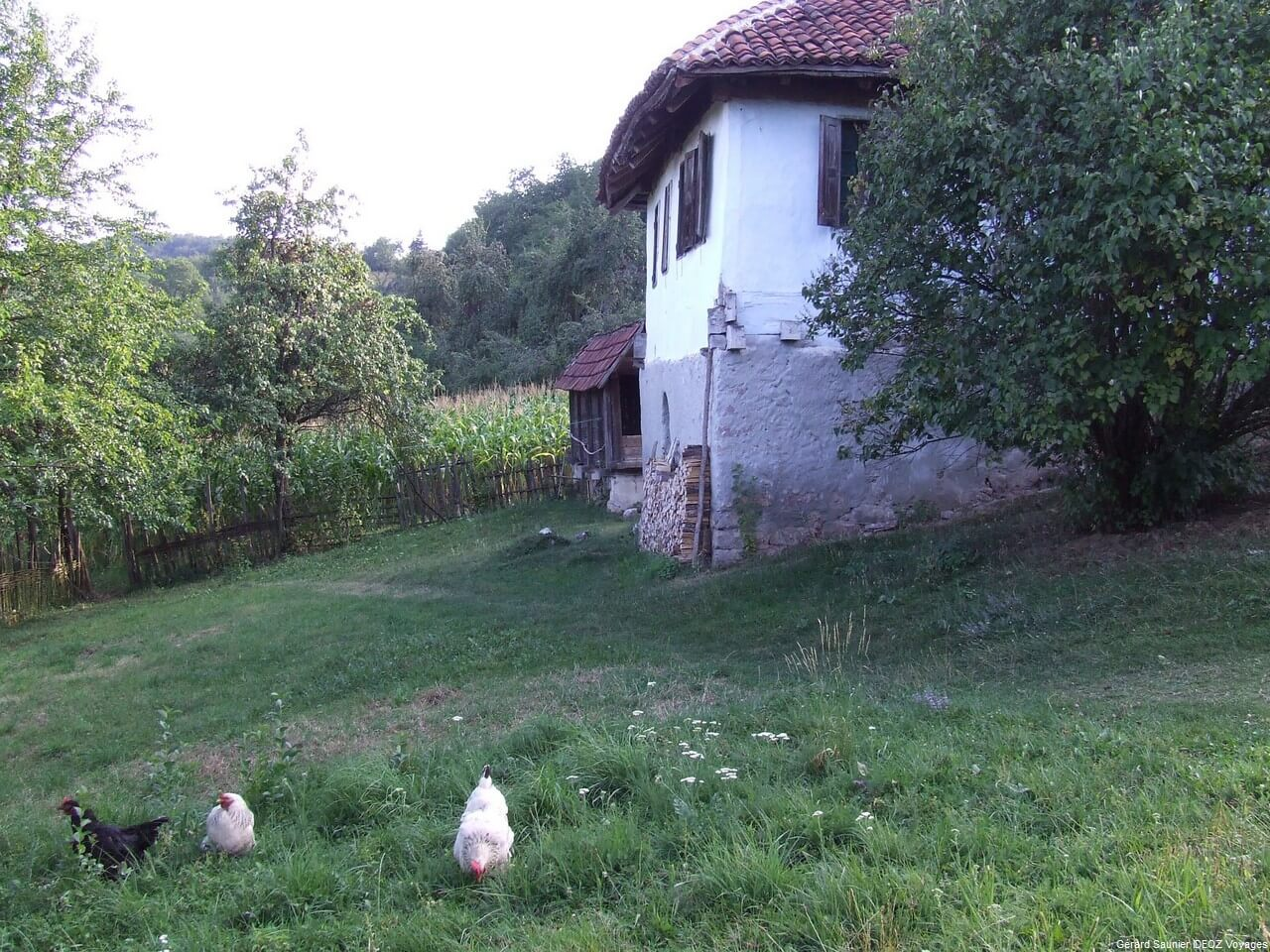 Rencontre inoubliable à Arilje en Serbie centrale : merveilleux souvenir 16