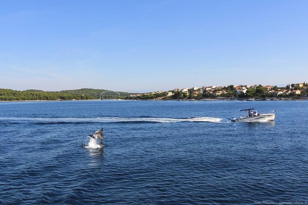 Découverte des dauphins dans l'Adriatique en Croatie