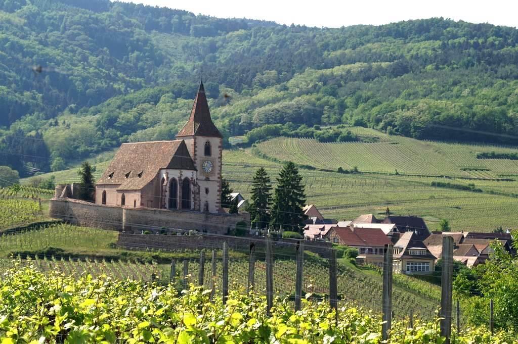 Environs de Ribeauville en Alsace
