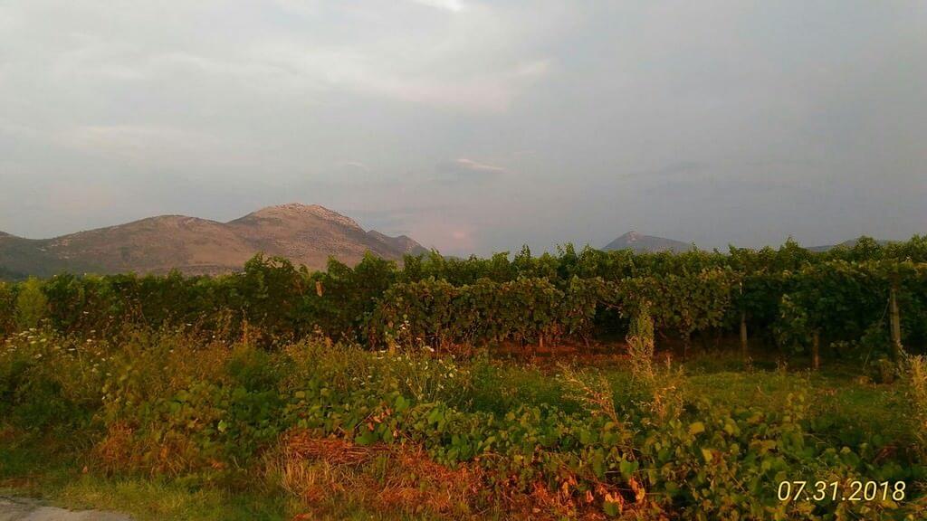 https://voyages.ideoz.fr/wp-content/uploads/2018/09/Vignes-de-Mélanie-et-son-mari-en-Dalmatie-du-sud.jpg