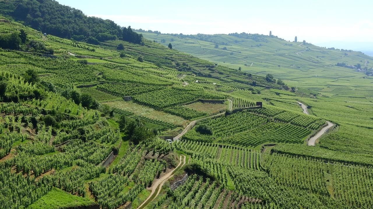 Vignobles sur la route des vins d'Alsace