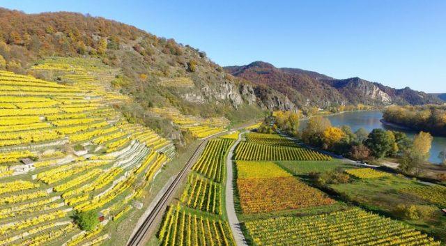 vignes de la haute vallée du rhin en Allemagne