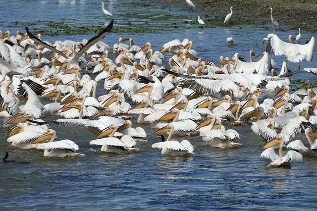 oiseaux du delta du danube
