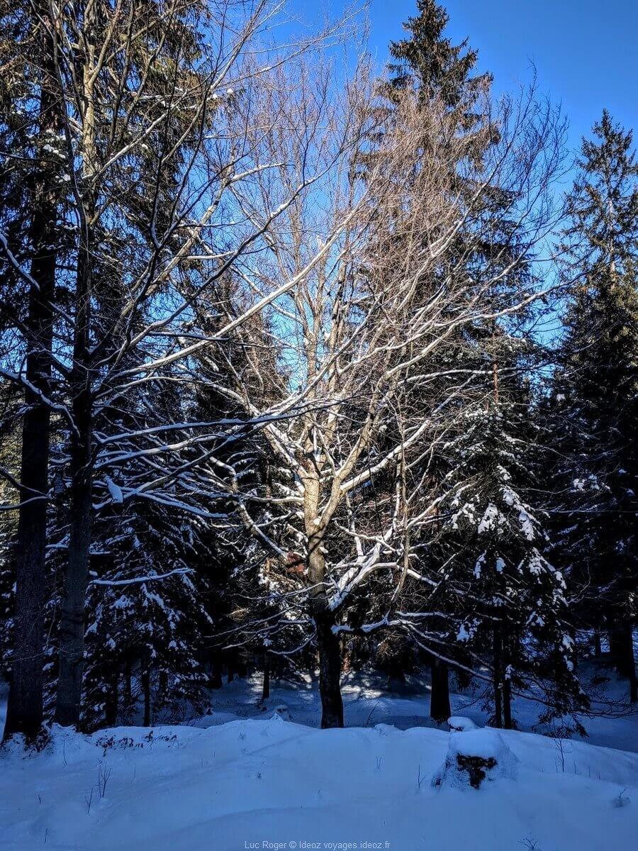 Arbres près de Mittenwald sous la neige