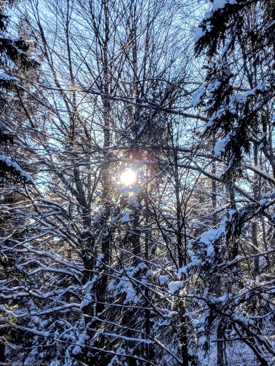 soleil d'hiver entre les branches enneigées dans les alpes bavaroises