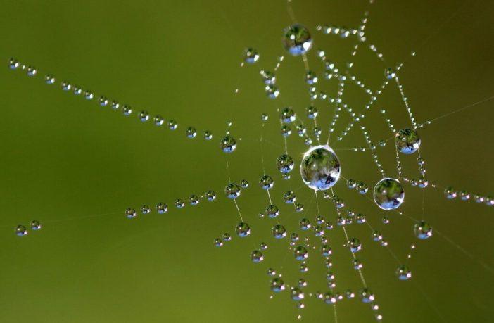 toile d'araignée et perles de rosée