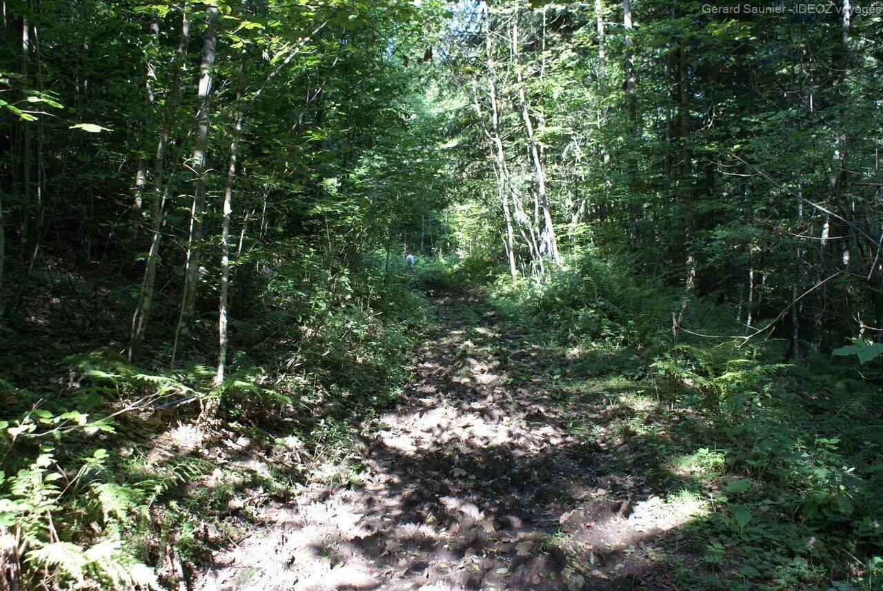 forêts en Serbie à la Bosnie à Brunica