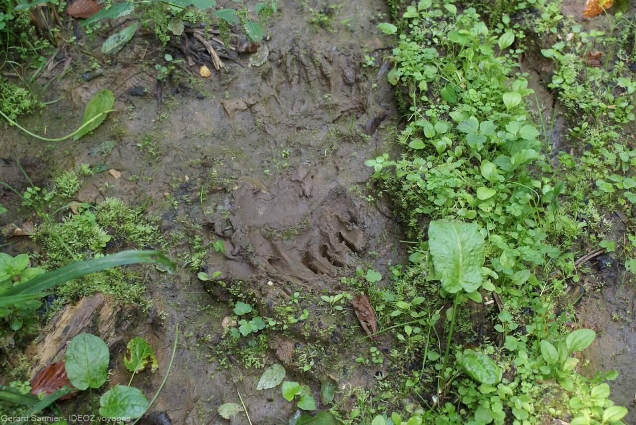 partir à la recherche des ours bruns de serbie