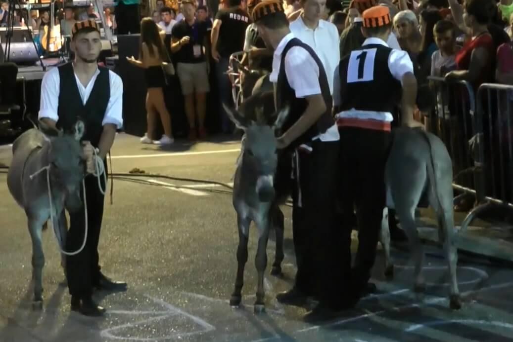 Course d'ânes de Tribunj ; une tradition hilarante en Dalmatie centrale 1