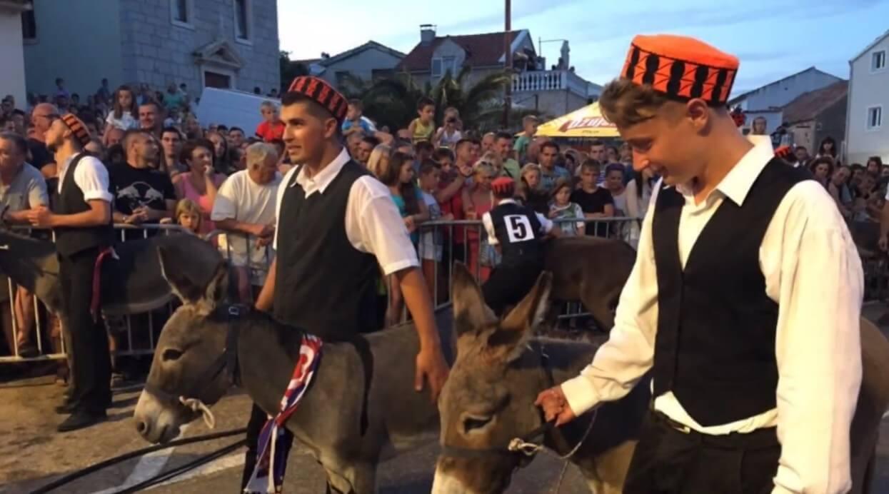 Course d'ânes de Tribunj ; une tradition hilarante en Dalmatie centrale 3