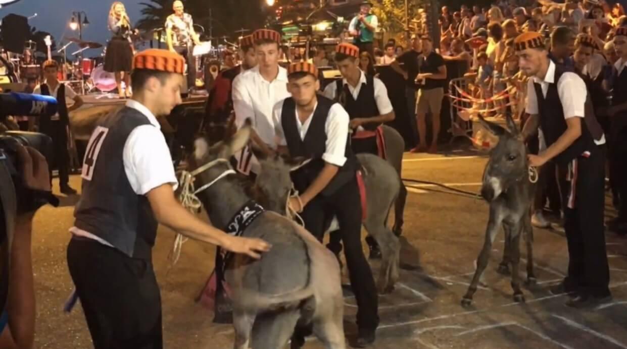 Course d'ânes de Tribunj ; une tradition hilarante en Dalmatie centrale 4