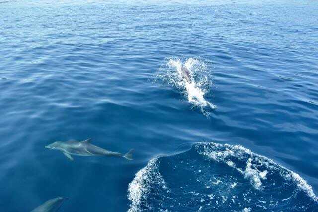 dauphins dans la région de zadar