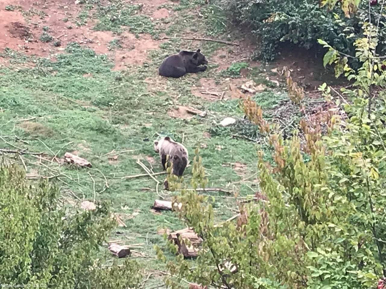 Refuge des ours de Kuterevo : rencontre avec les ours bruns de Croatie 15