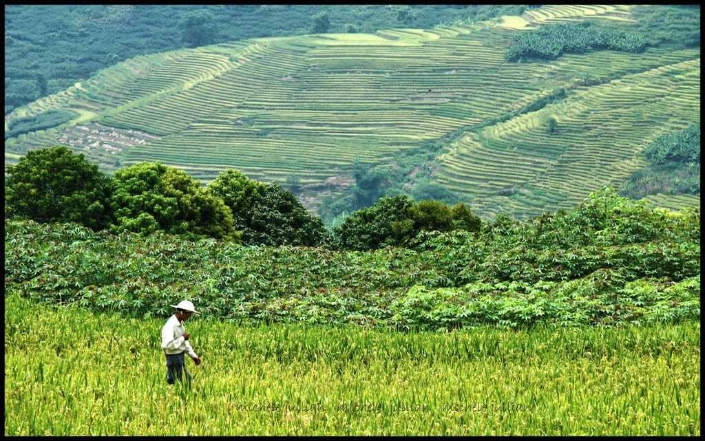 riziculture en asie