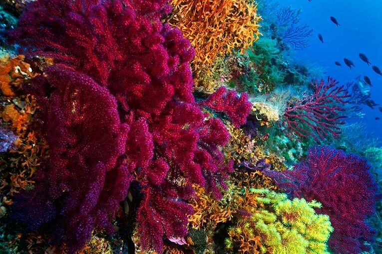 Où faire de la plongée en Croatie? Top 5 des meilleurs sites de plongée 7