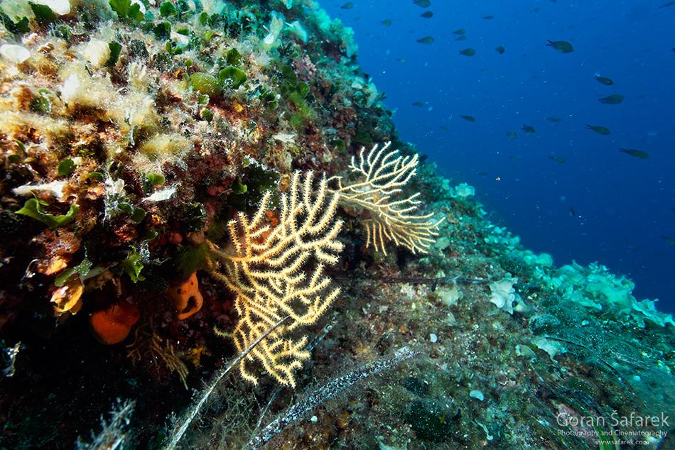 Où faire de la plongée en Croatie? Top 5 des meilleurs sites de plongée 4