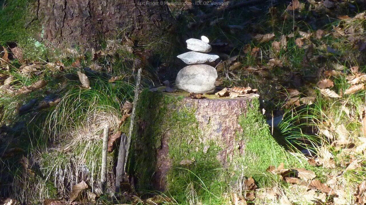 pierres sur un tronc sur le sentier de randonnée entre le lac ammersee et andechs