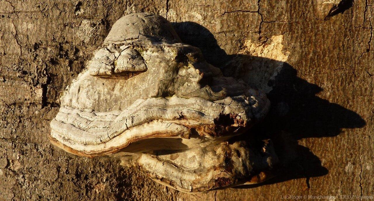écorce d'arbre près du lac ammer en bavière
