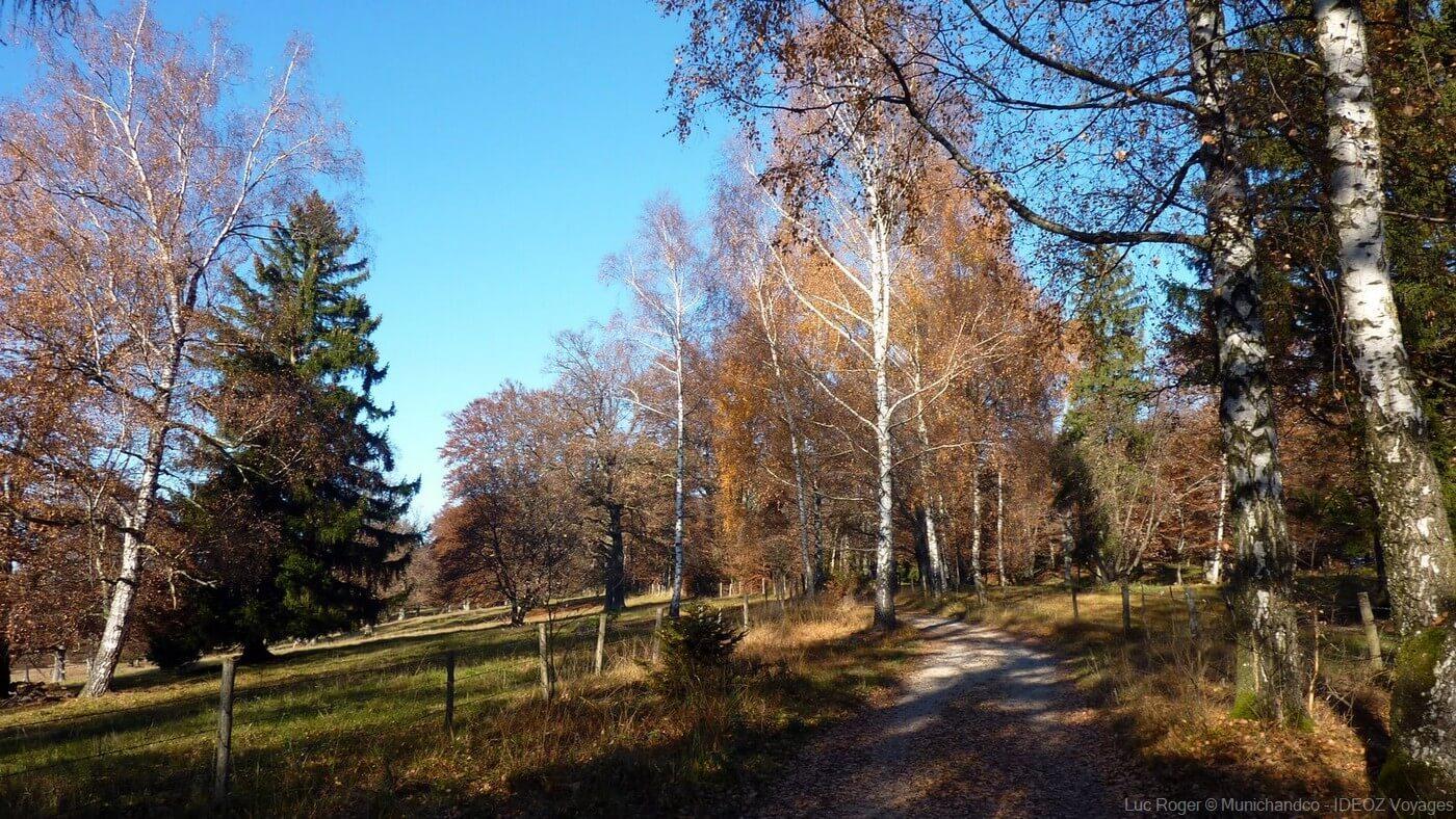 sentier dans la région d'ammersee en automne en bavière