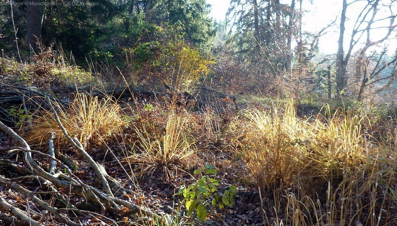 végétation de l'automne en bavière sur les sentiers près du lac ammer