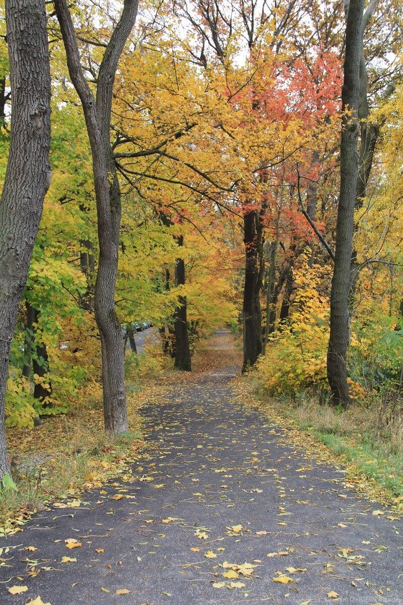 arbres colorés en automne à himmel près de vienne