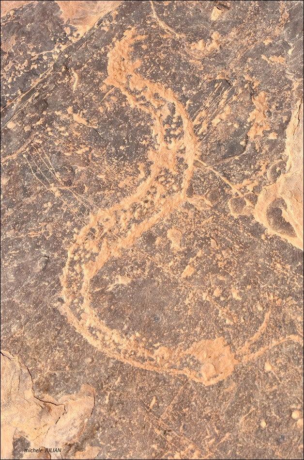 gravures pariétales dessin d'un serpent trouvé au sahara