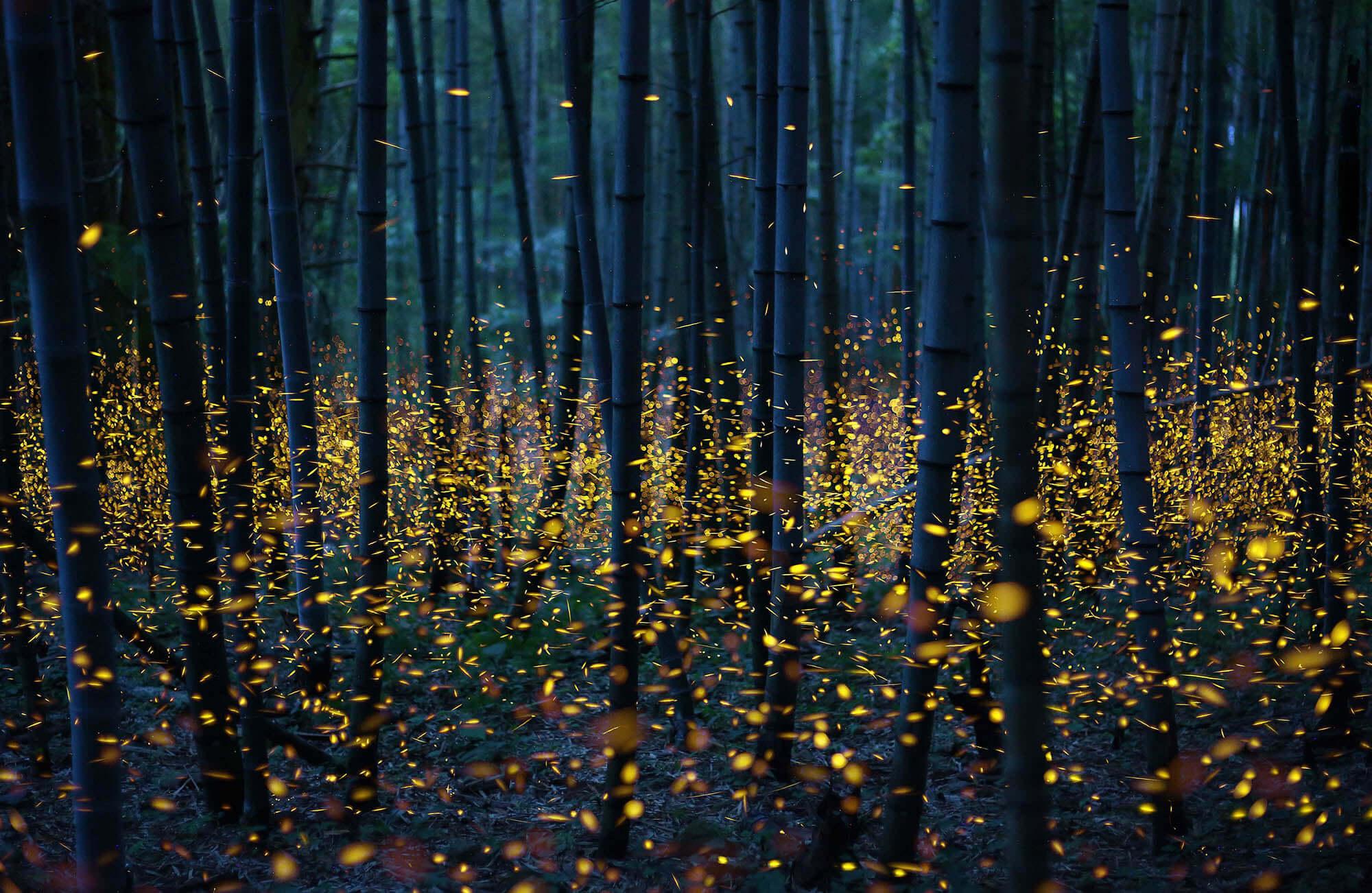lucioles