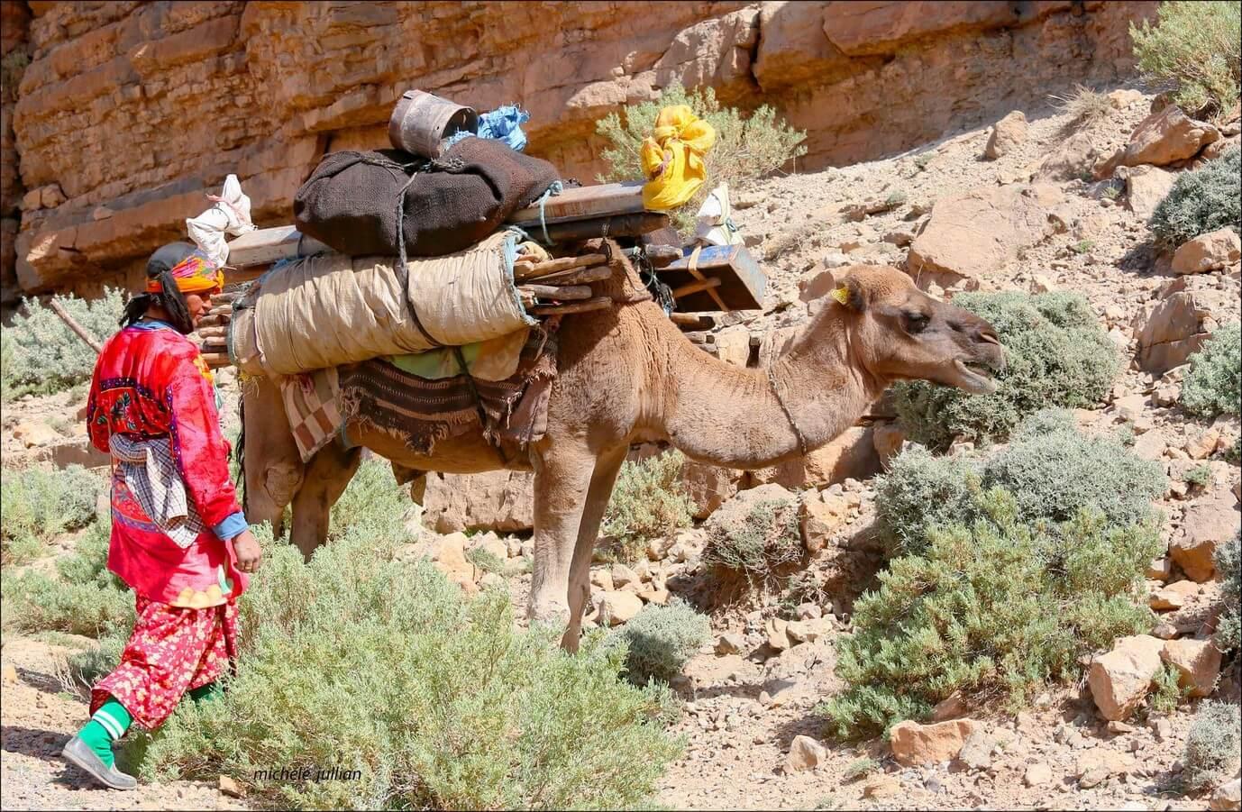 nomade berbère près de son chameau sur la route  entre Saghro et le Haut Atlas