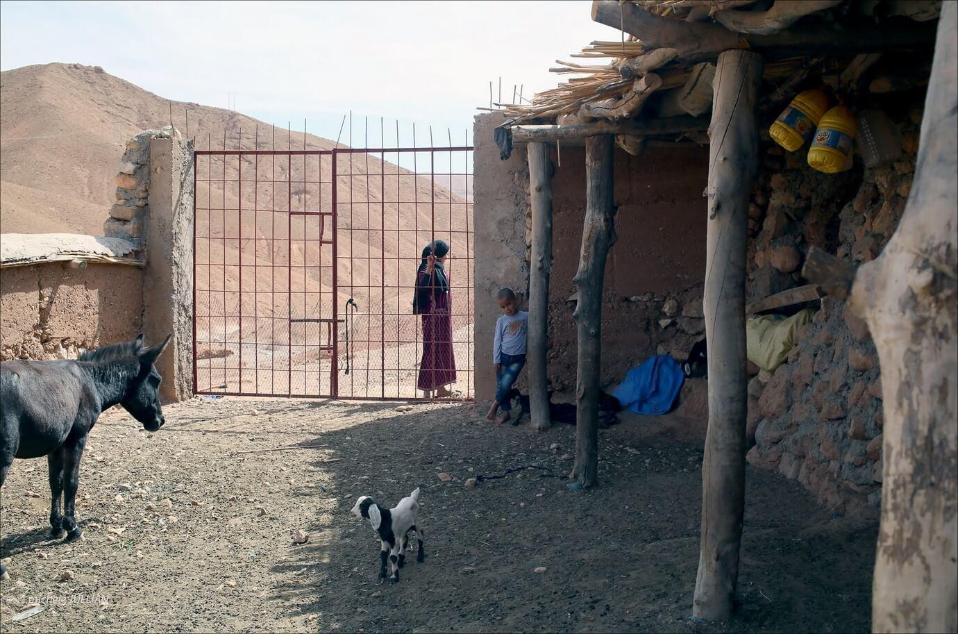 nomades berbères et animaux