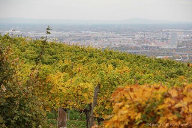paysages des vignes aux environs d'Himmel près de Vienne en autriche