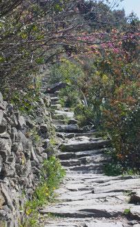 Cinque Terre, la Riviera Ligure du Levant (Voyage Italie) 30
