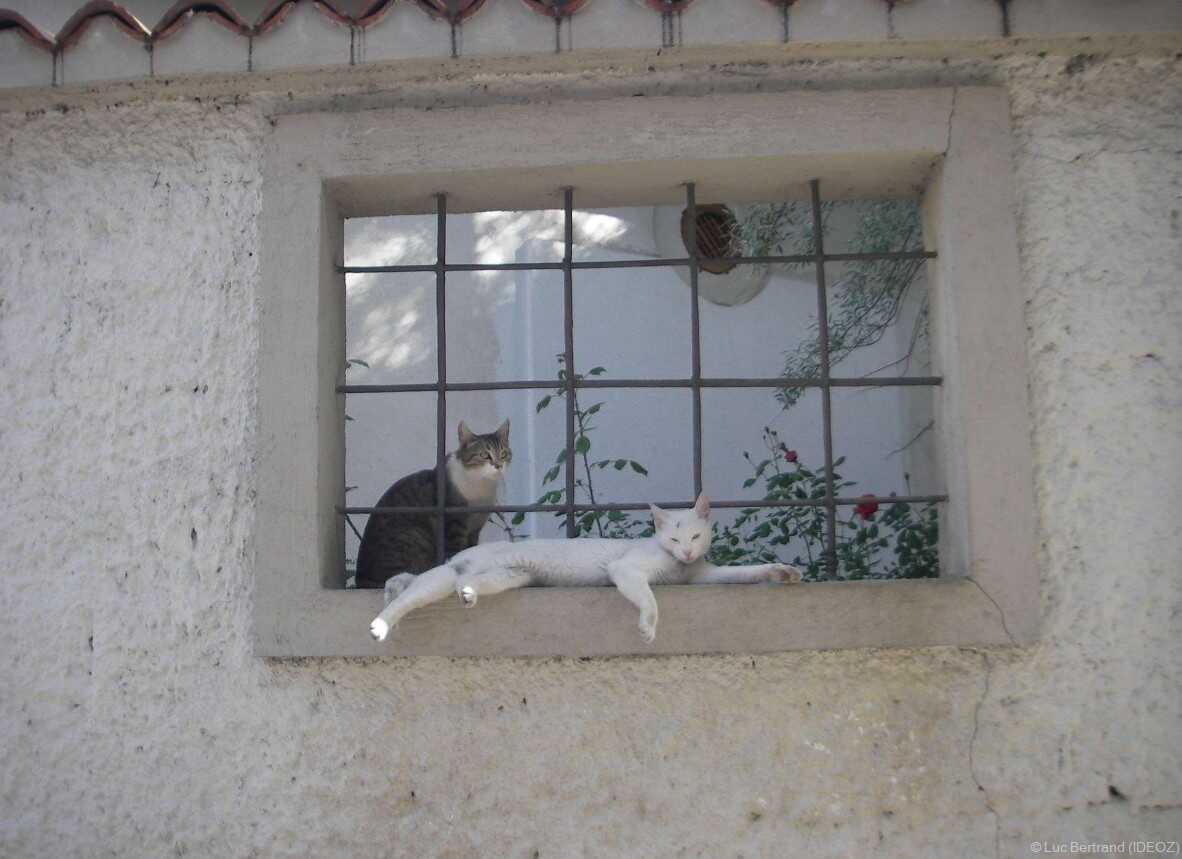 chats de sarajevo