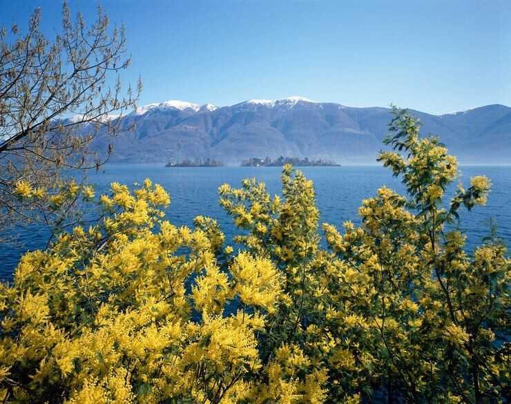 bouches de kotor en février lors des jours du mimosa