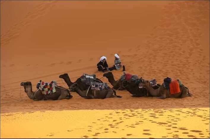 chameaux dans le désert marocain