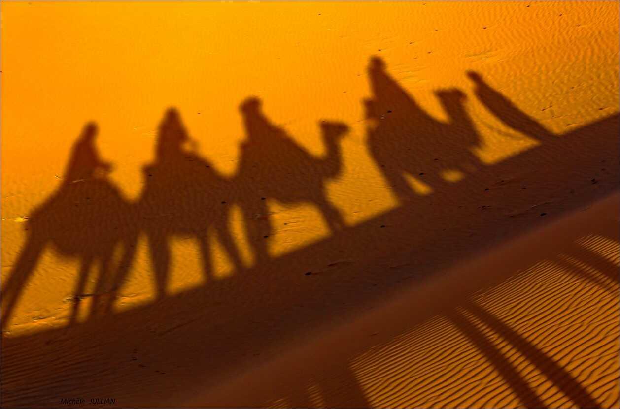 chameaux dans les dunes du désert au maroc