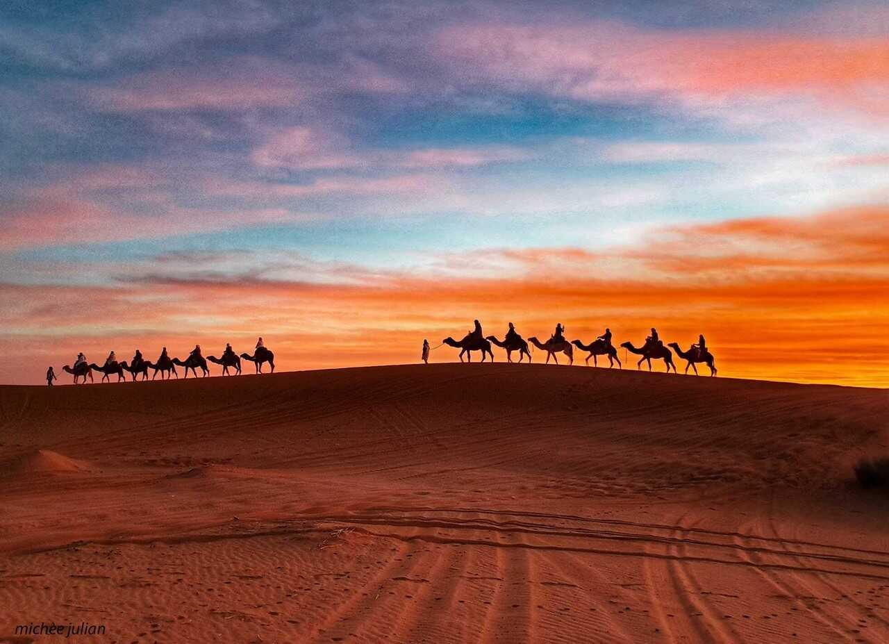 chameliers et dromadaires dans le désert berbère au maroc