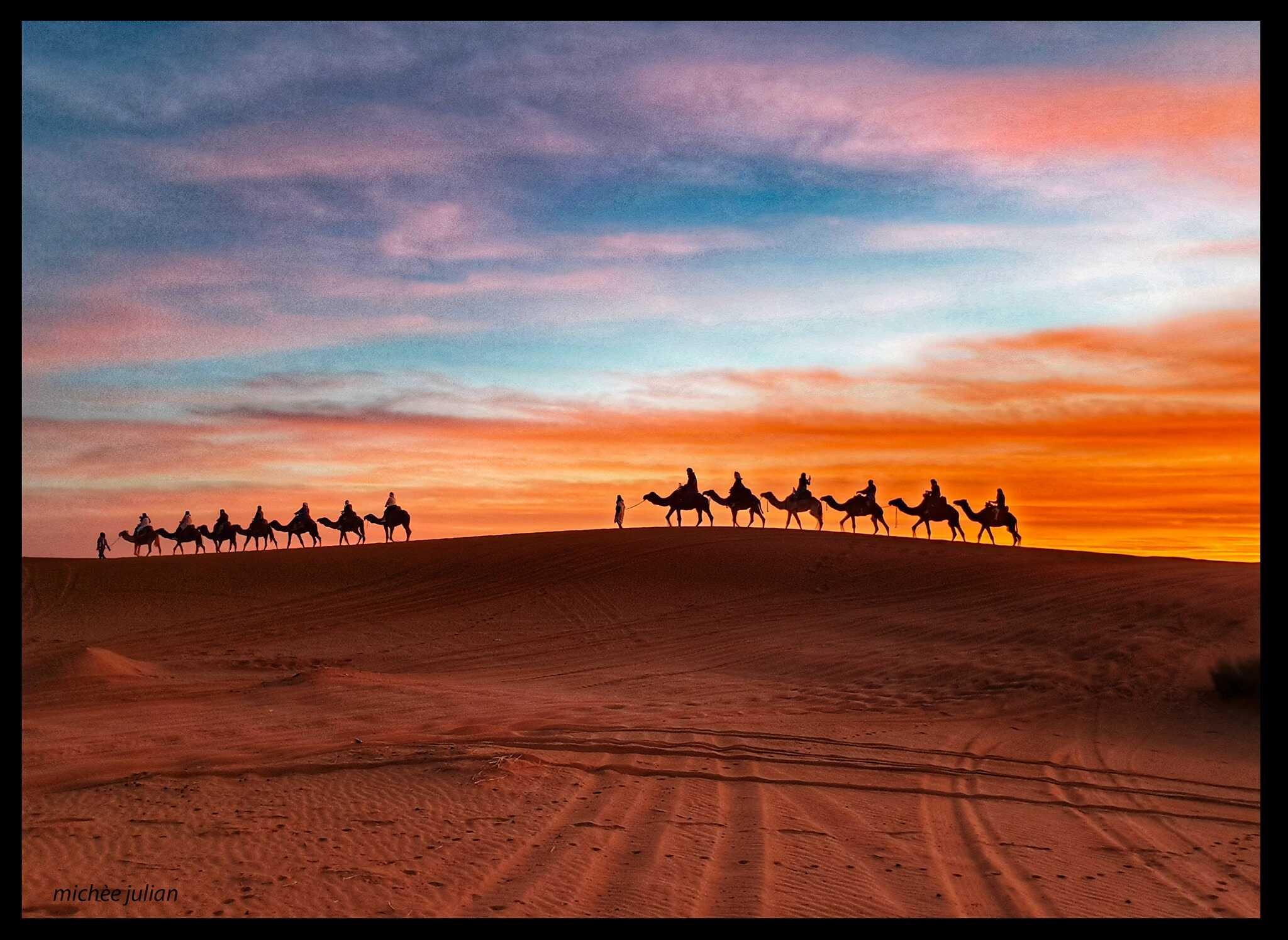 dromadaires dans le désert marocain