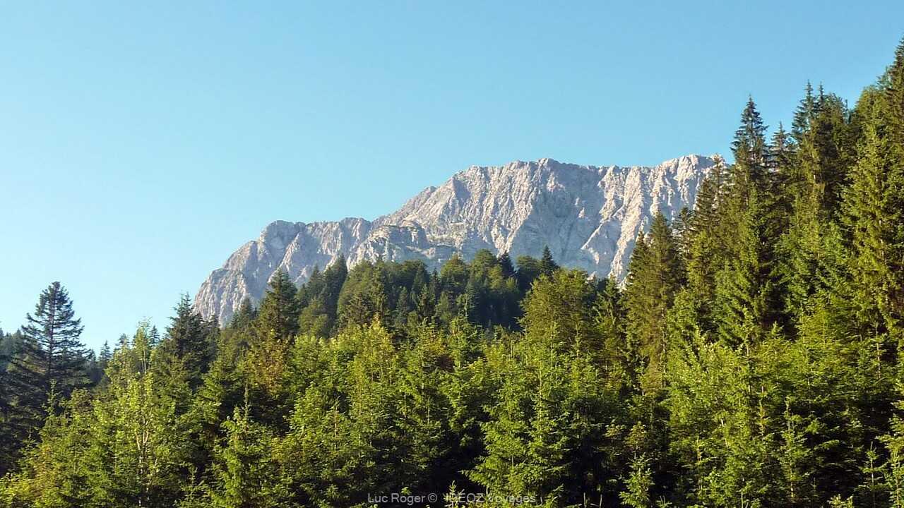 forêt dans les alpes bavaroises près de   Schachenhaus