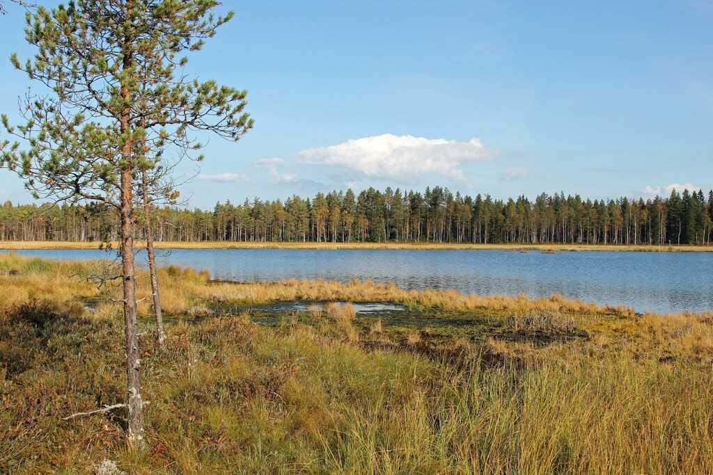 lac en finlande et forêts