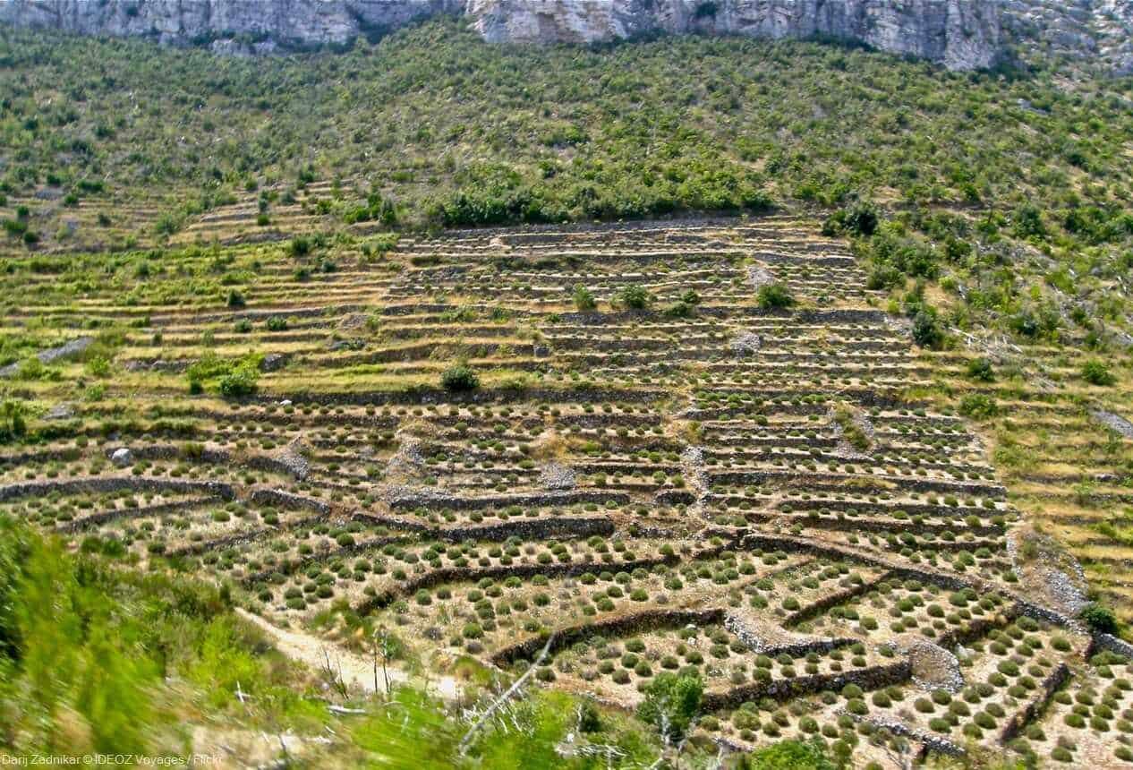 paysages ruraux sur l'île de Hvar