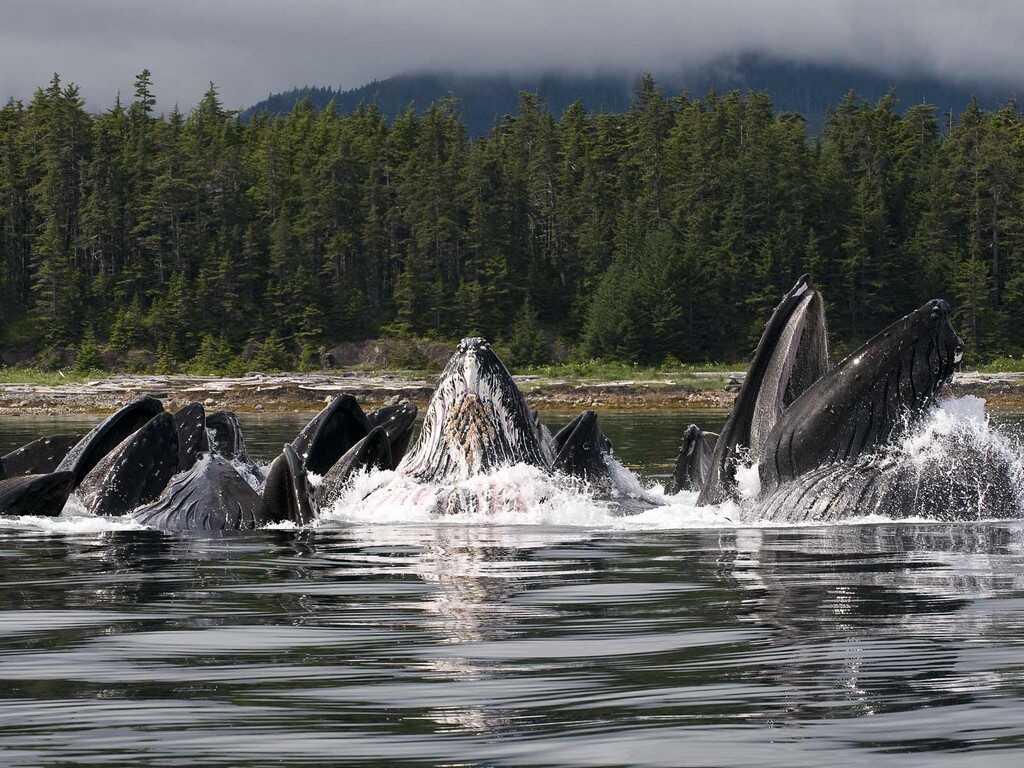 océans baleines