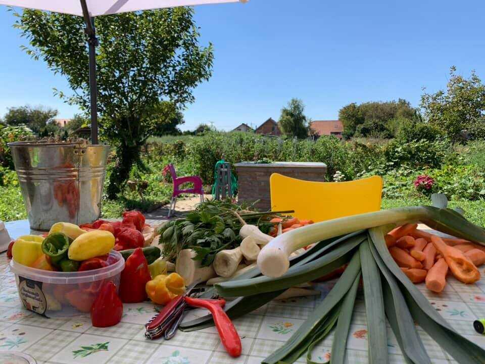 légumes du potager pour préparer la soupe de légumes de slavonie