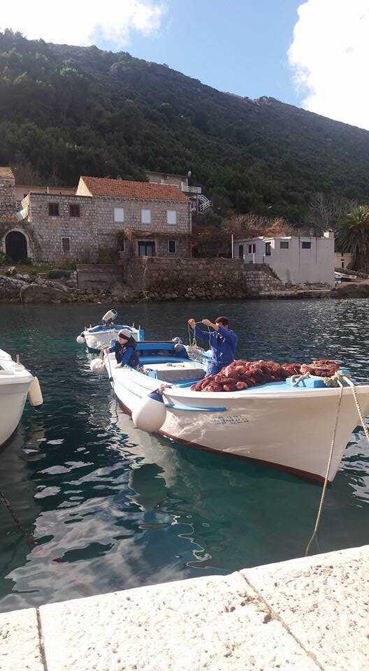 Merveilleux séjour sur l'île de Mljet chez Blazenka Cumbelic à Kozarica 4