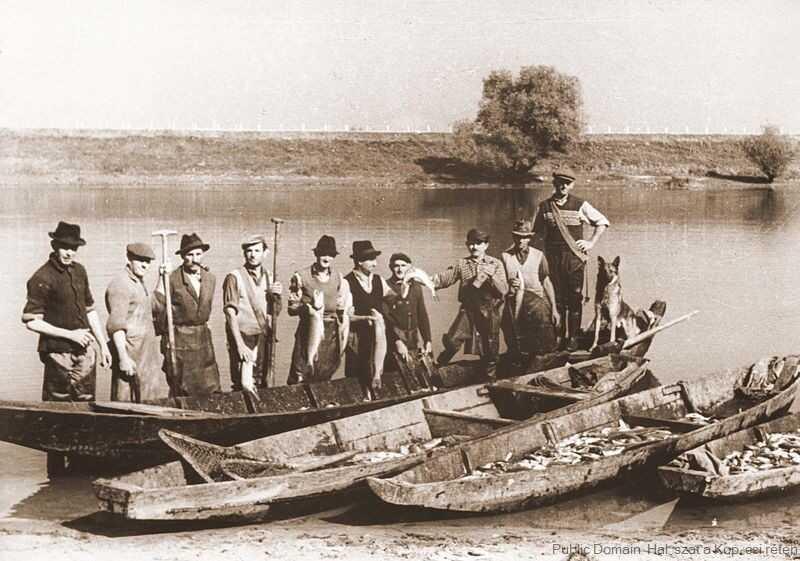 pêche sur les bords de la drave à kopacevo