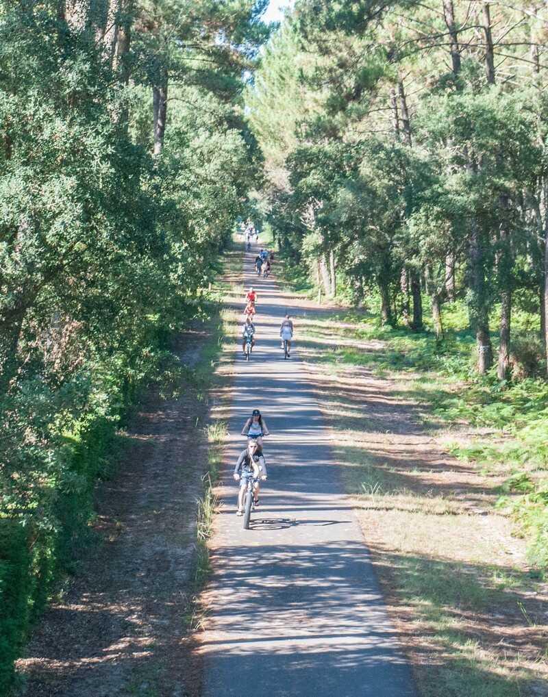 balade à vélo dans les forêts landaises