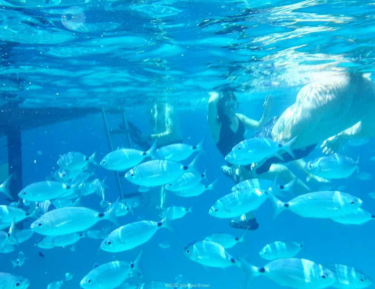 snorkeling dans les eaux turquoises dans les kornati